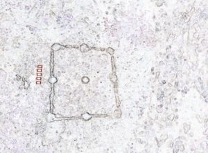 Alquerque atopado no nos Picos da Torre, en Cervantes. Ten un efecto debido a que se atopa bastante desgastado / Xabier Moure