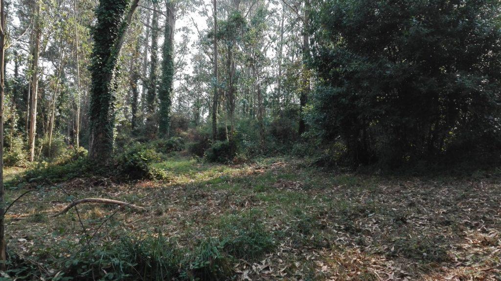 Restos do outeiro Quirinale, hoxe en día o actual lugar de Quiñalde. Nel rendíase culto ao deus Quirino, deus a quen os soldados romanos pedían pola paz