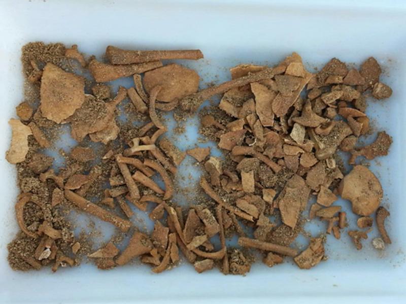 Restos dun bebé, probablemente do século I D.C. atopados na Lanzada / DEPO