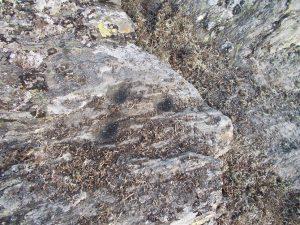 Petróglifo atopado na Fonsagrada, a case 1.000 metros de altitude / Xabier Moure