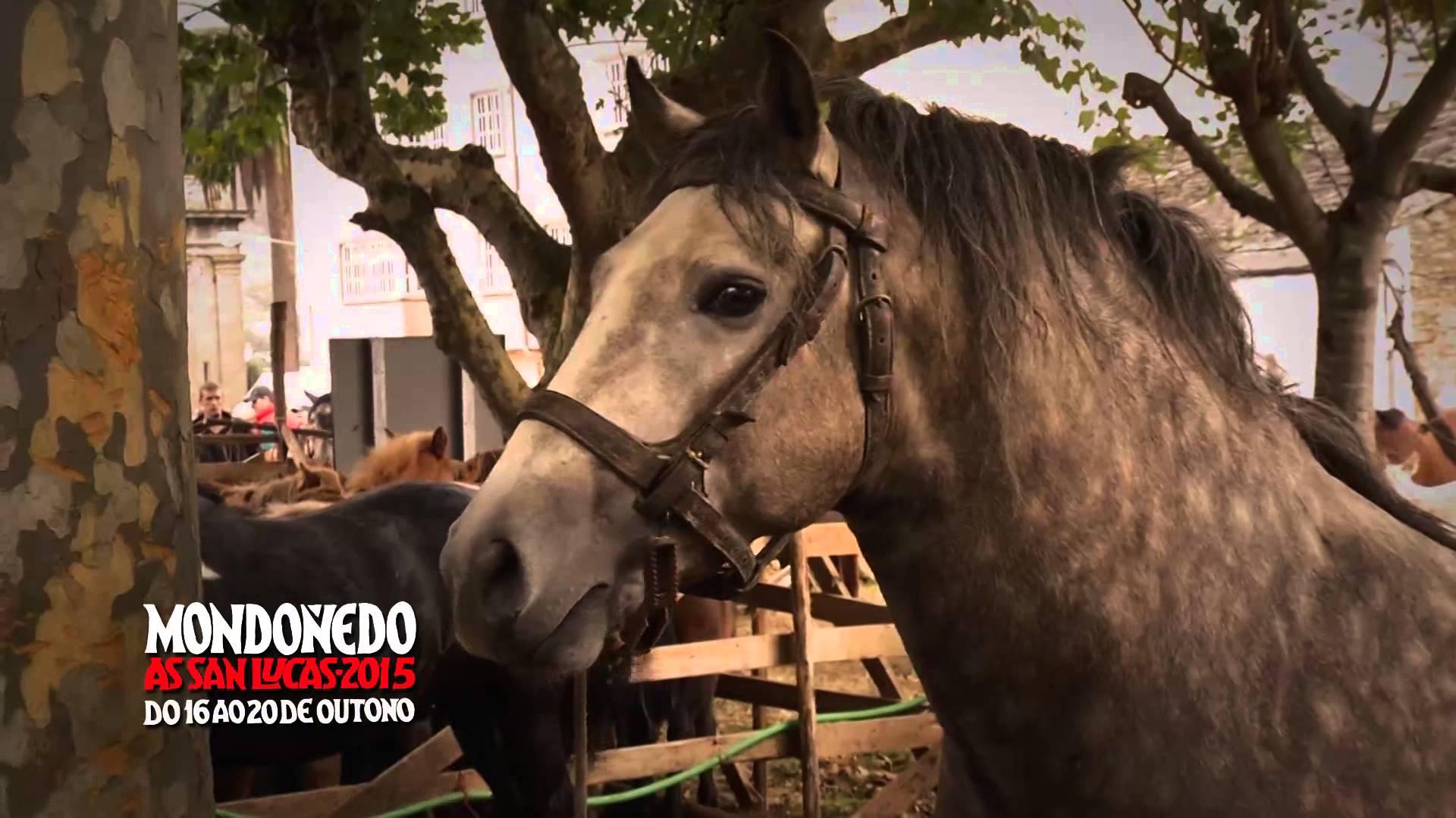 Cabalos na feira de San Lucas, en Mondoñedo / Cyberspace & Time