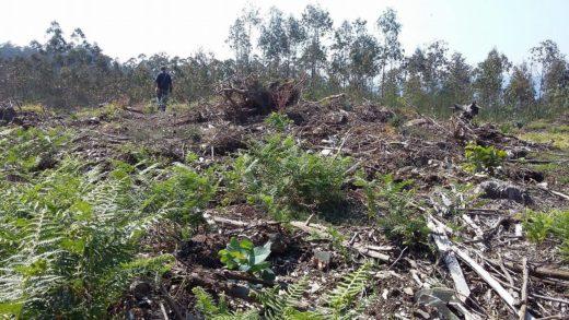 HdG lanza un formulario Online para dar conta dos atentados contra o patrimonio… Pásao
