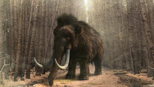 Como foi o descubrimento do único mamut de Galicia
