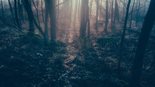 Descobren enterrada nun bosque de Ribas de Sil unha igrexa renacentista